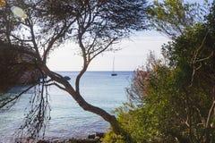 Пляж увиденный среди деревьев на солнечном утре, Minorca Macarella Стоковые Фотографии RF