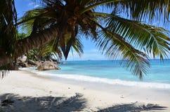 пляж экзотический Стоковое Фото