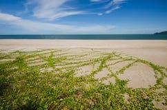 Пляж Стоковое Изображение RF