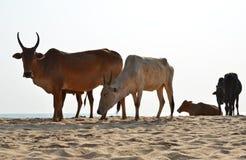 Пляж Agonda южного Goa, Индии Стоковое Изображение