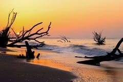 Пляж Boneyard залива ботаники, остров Edisto Стоковые Изображения