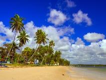 Пляж Carneiros Стоковая Фотография
