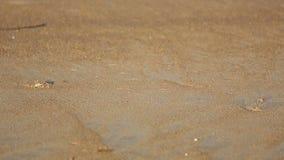 пляж crabs песок видеоматериал