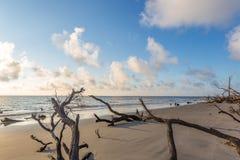 Пляж Driftwood, остров Georgia Jekyll Стоковая Фотография