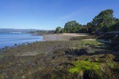 Пляж El Tronco Стоковое Изображение RF