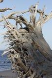 Пляж Fernandina, Джексонвилл, Флорида Стоковая Фотография