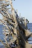 Пляж Fernandina, Джексонвилл, Флорида Стоковые Фото