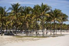 пляж florida miami США Стоковое Изображение