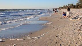 пляж florida naples акции видеоматериалы