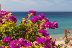 Пляж Jandia в Фуэртевентуре, Испании Стоковое Изображение RF