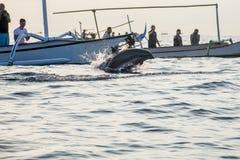 Пляж Lovina шлюпки свободного дельфина Бали наблюдая Стоковые Изображения RF
