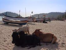 Пляж Palolem Стоковые Изображения RF