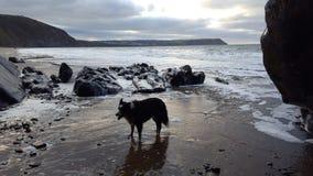 Пляж Penbryn стоковое фото rf