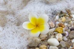 Пляж Plumeria Стоковое Фото