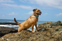 Пляж Puggle Стоковое Изображение