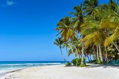 Пляж Sandy карибский с пальмами кокоса и голубым морем Стоковые Изображения RF