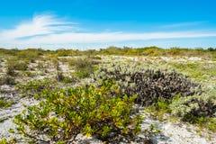 Пляж Sanibel Стоковые Фотографии RF