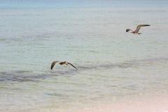 Пляж Santa Rosa Стоковое Фото