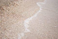 Пляж seashells Стоковая Фотография