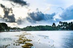 Пляж Toco Стоковые Фотографии RF