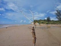 Пляж Tusan Стоковые Изображения