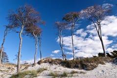 Пляж darss, Германии стоковое изображение