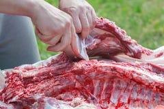 Работающий на самого себя мясники отделяя тушу баранины фермы для частей мяса стоковые фотографии rf