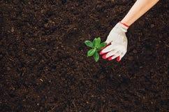 Работающ в саде, засаживая завод Взгляд сверху почвы Стоковое фото RF