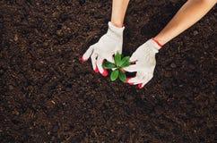 Работающ в саде, засаживая завод Взгляд сверху почвы Стоковые Изображения