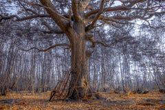 Работая лес Стоковые Изображения