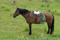 Работая лошадь с седловиной и уздечкой стоящ и ждущ чабана среди зеленой травы стоковая фотография