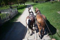 2 работая лошади Стоковая Фотография
