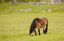 Работая лошадь Стоковое Изображение RF