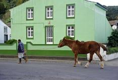 Работая лошадь Стоковая Фотография RF