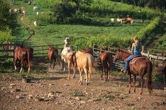 Работая пастушка на ферме лошади Стоковые Изображения RF