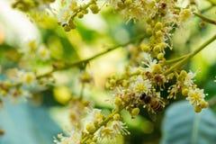 Работая пчела Стоковое фото RF