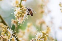 Работая пчела Стоковые Фото