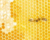 Работая пчелы Стоковая Фотография