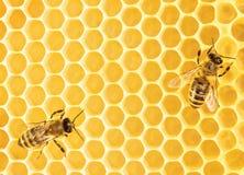 Работая пчелы Стоковые Фотографии RF