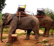 Работая слоны Стоковые Изображения