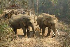 Работая слон, Мьянма стоковые фото
