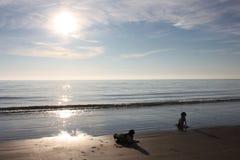 2 работая тип gundogs spaniel английского Спрингера на пляже Стоковые Фотографии RF