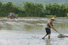 Работа в полях риса Стоковые Изображения