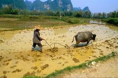 Работа в рисовых полях Стоковые Фото