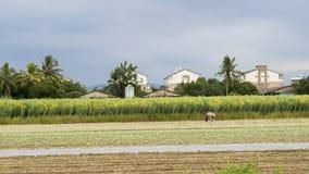 Работа женщины на сельской местности Стоковая Фотография