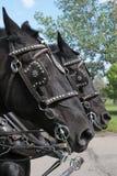 работа лошадей 2 harnes Стоковые Изображения RF