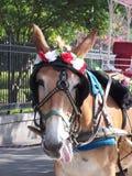 работа лошади Стоковая Фотография
