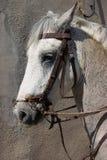 работа лошади Стоковое Изображение RF