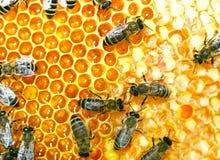 работа пчел Стоковое Фото