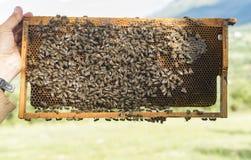 Работа пчел на соте Стоковая Фотография